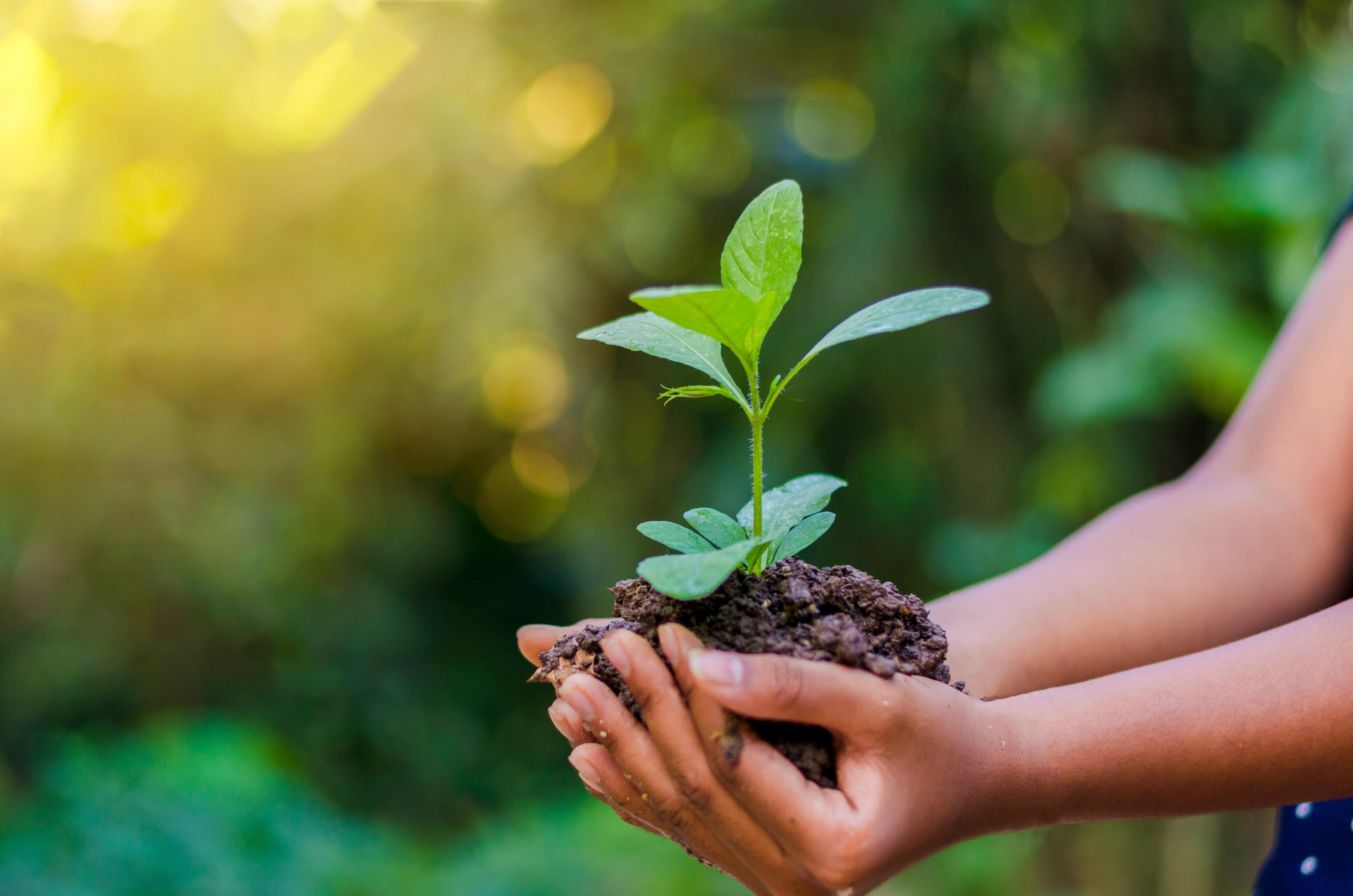 Kommunesektorens Løft For Bærekraft